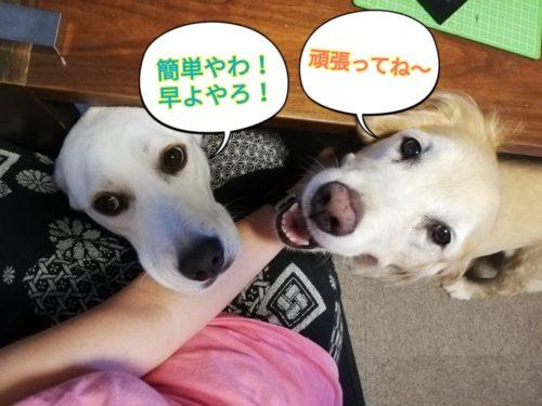 ドッグトリック ☆ 「タッチ&タップ」を学ぶ