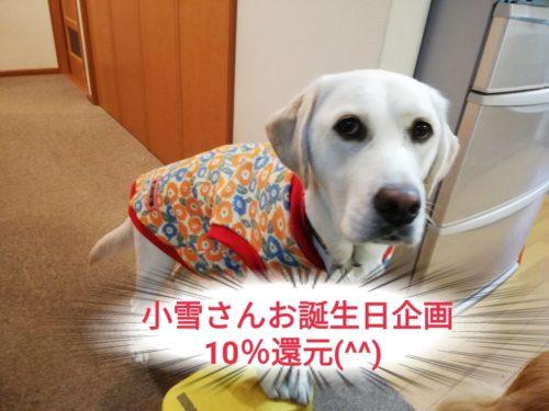 小雪さんお誕生日キャンペーン 10%還元