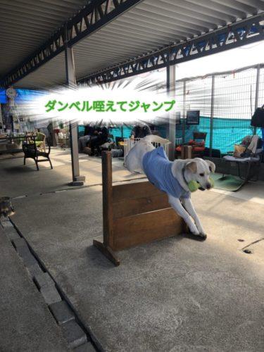 ドッグトリック ? 家庭犬訓練試験