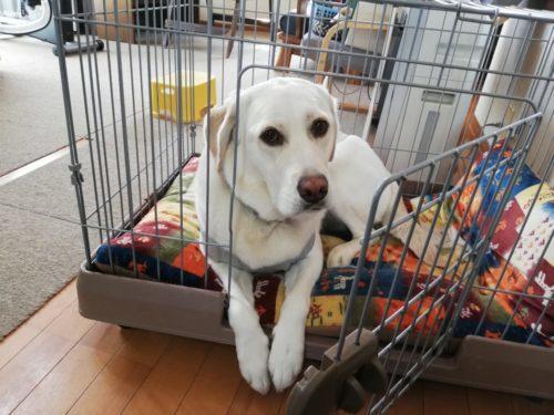 犬のトレーニング方法は多彩☆正しいフセで自我抑え