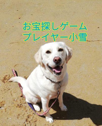 犬の嗅覚トレーニング ~ ニオイで鍵を探せるかな!?