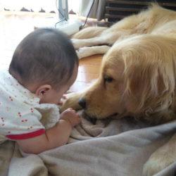 大型犬とともに初めての子育てを経験してきました