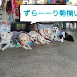 家庭犬訓練試験(CD) ~ 待つことの大切さ