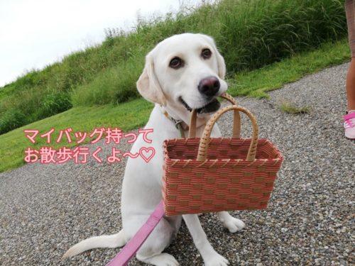 マイバッグ持ってルンルン♡小雪さんのお散歩